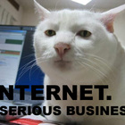 Internet serious business cat