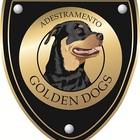 Golden Dogs - Adestramento ...