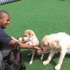 Adestrador de Cães Com Meto...