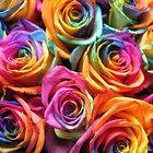 Flores para cada ocasiao 6