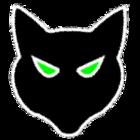 Gato rosto fundo preto