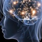Neuromarketing stakeholders